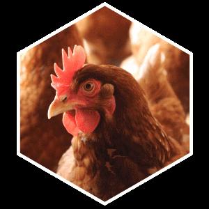 hexagon-kip